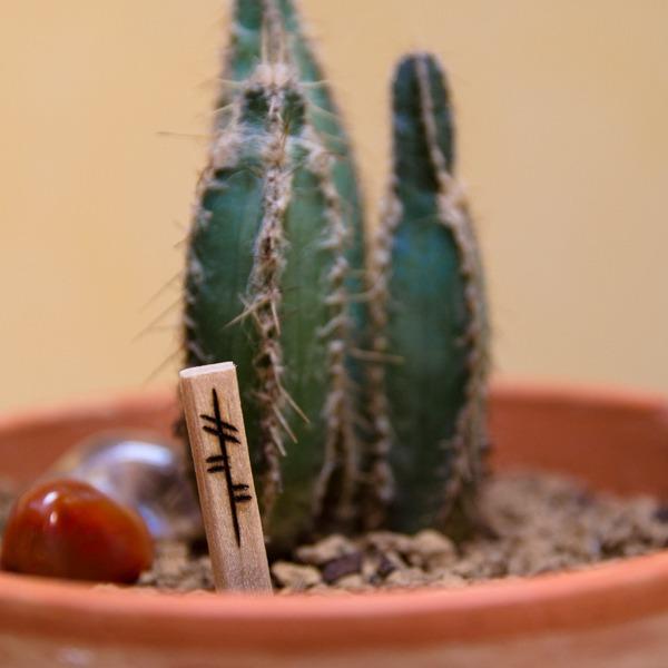 Petit charme de croissance, oghams gravés sur un morceau de bois